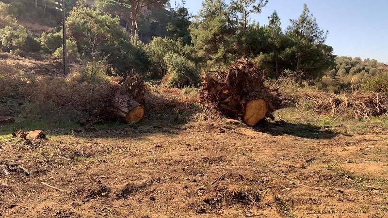 إخبار عن مخالفة بيع أشجار مقطوعة في مرج بسري