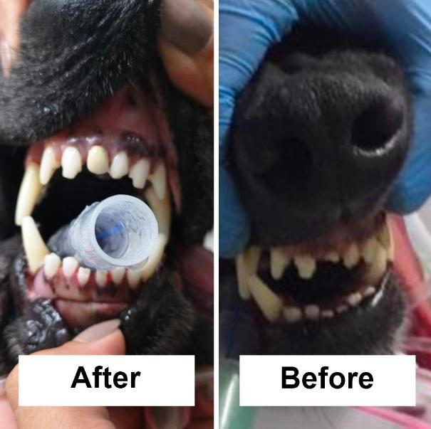 أول عملية زراعة أسنان لكلب في لبنان
